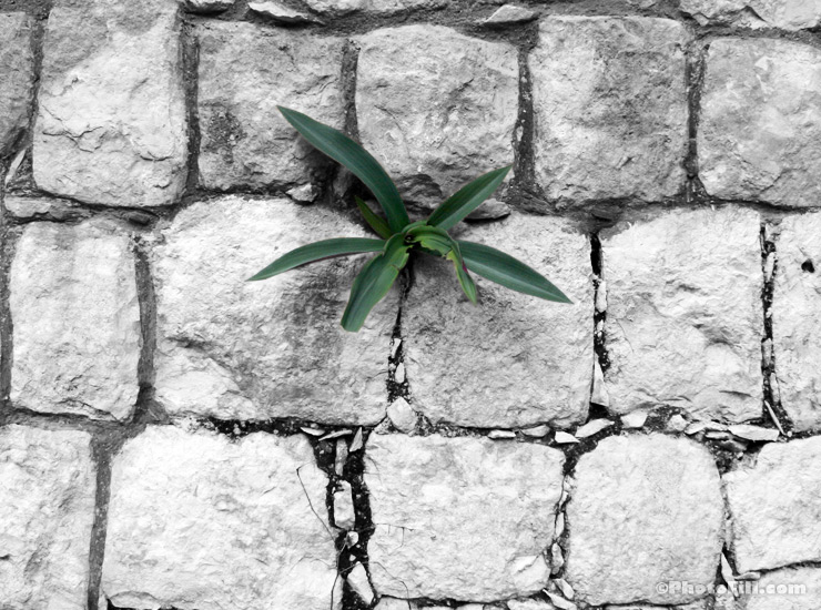 Plant growing out of the wall